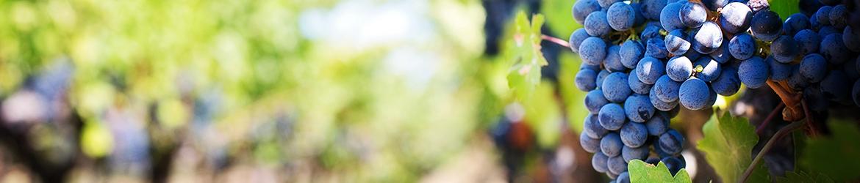 Thema wijnen